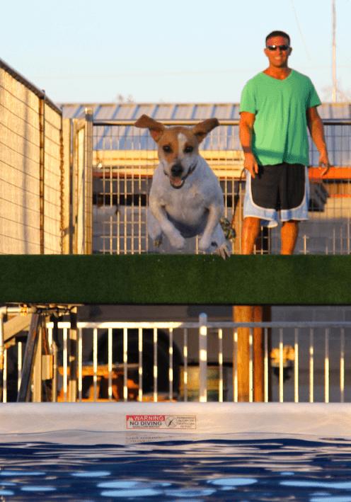 dock diving hunter canine